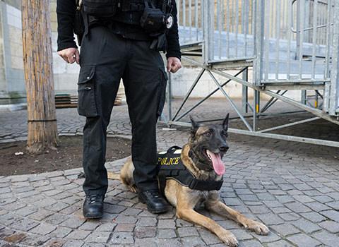 agent-cynophile-maitre-chien-agence-de-securite-ct-pro